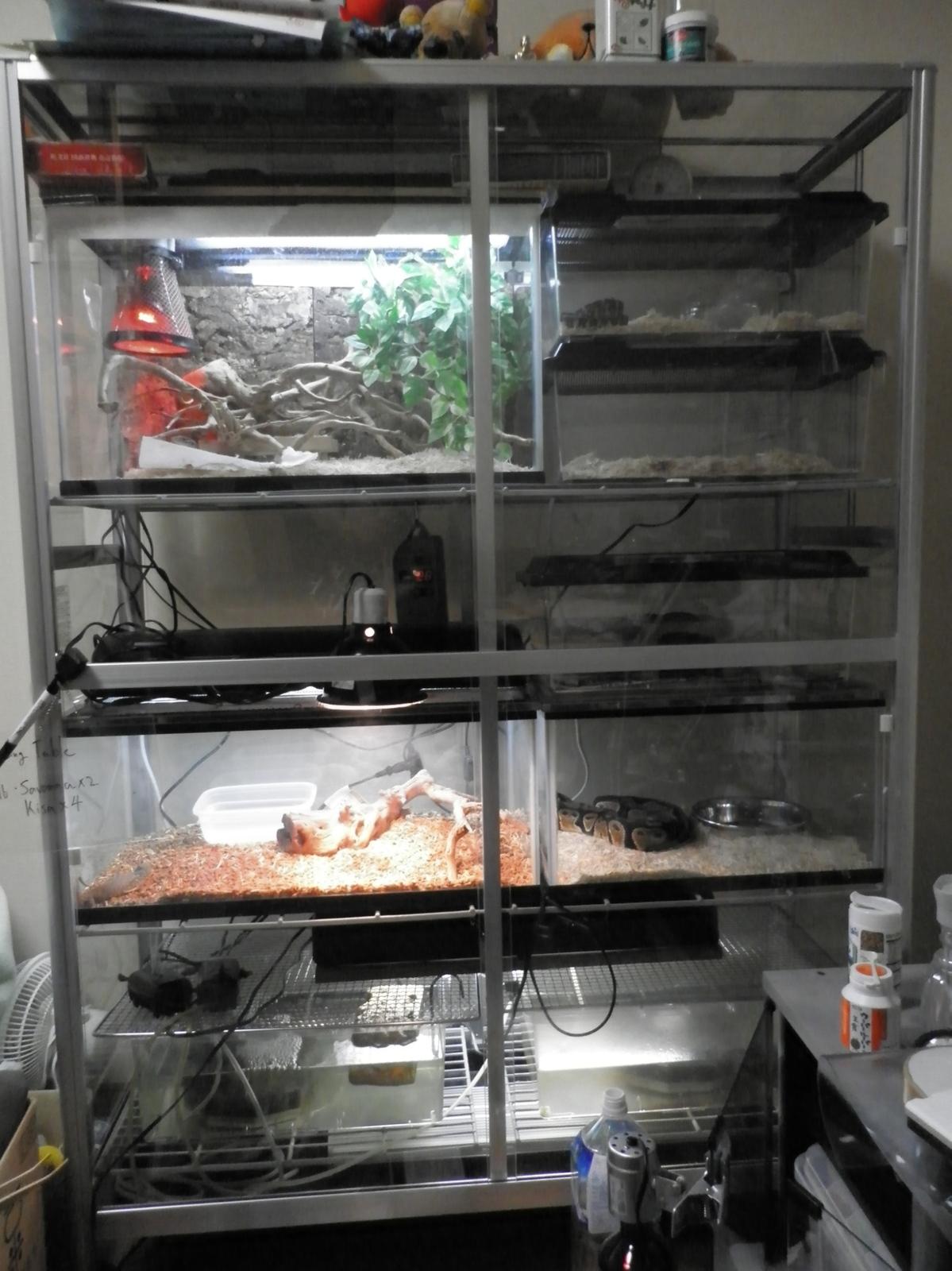 爬虫類 温室